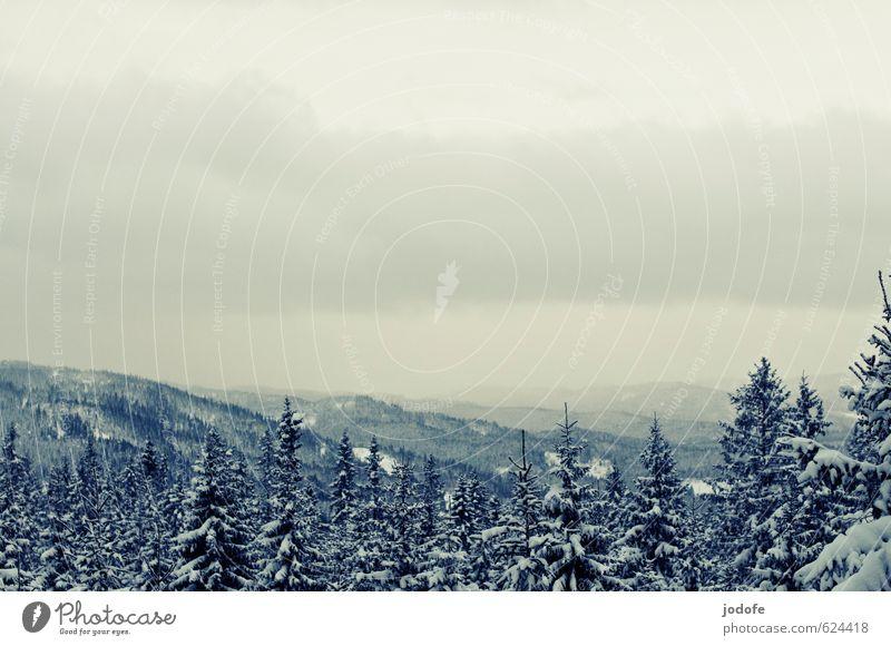 somewhere on your way Umwelt Natur Landschaft Pflanze Luft Himmel Wolken Winter schlechtes Wetter Eis Frost Schnee Baum Wald Hügel Berge u. Gebirge friedlich