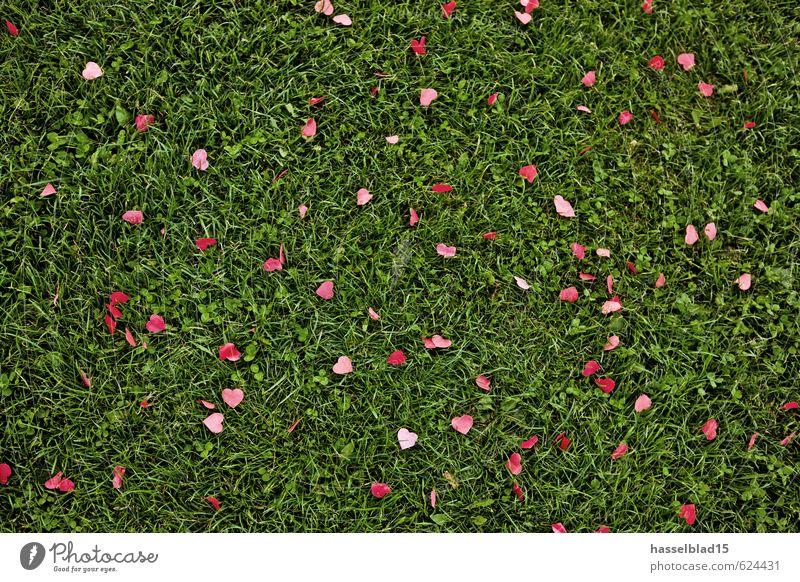 heartbreaker grün rot Freude Liebe Stil Glück Party Paar Lifestyle Geburtstag Herz Papier Hochzeit Rasen Veranstaltung Wohlgefühl