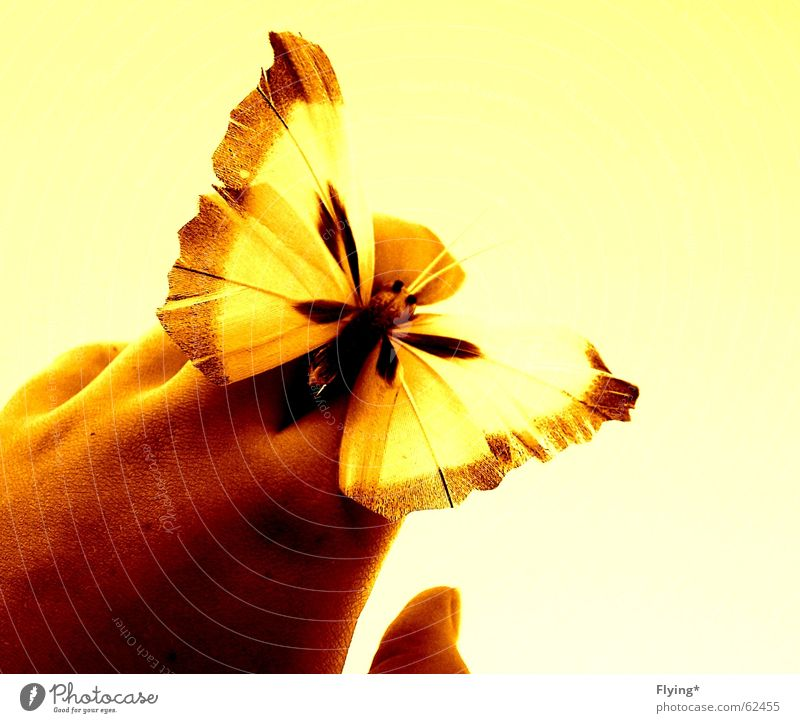 summerfeelings Hand Sommer gelb frei Finger Flügel Schmetterling Sommertag Vor hellem Hintergrund