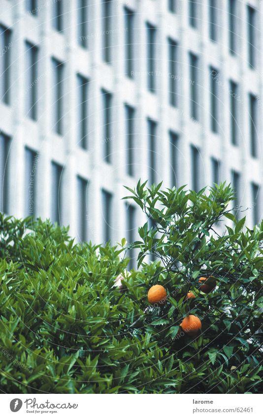 kontrast Baum orange Fassade USA Kalifornien