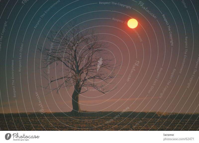 Herbst2 Baum Sonne Stimmung