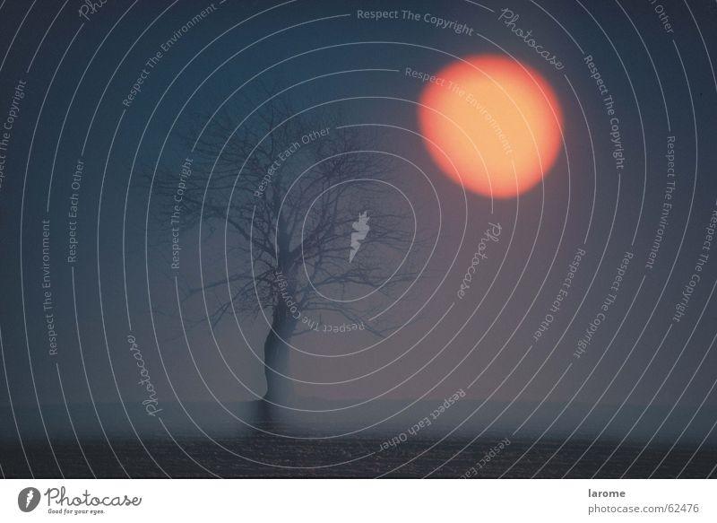 herbst3 Baum Stimmung Sonne Abend sandwichtechnik
