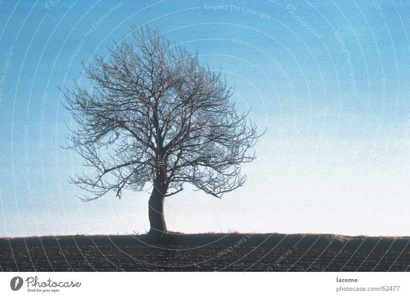 herbst1 Himmel Baum blau