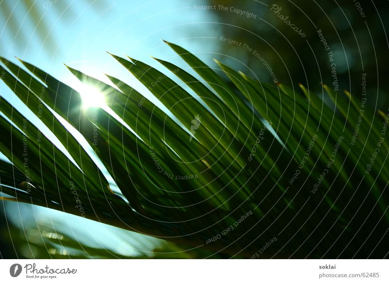 palm palm palme... Palme Sträucher Pflanze komische pflanze Sonne reflektion
