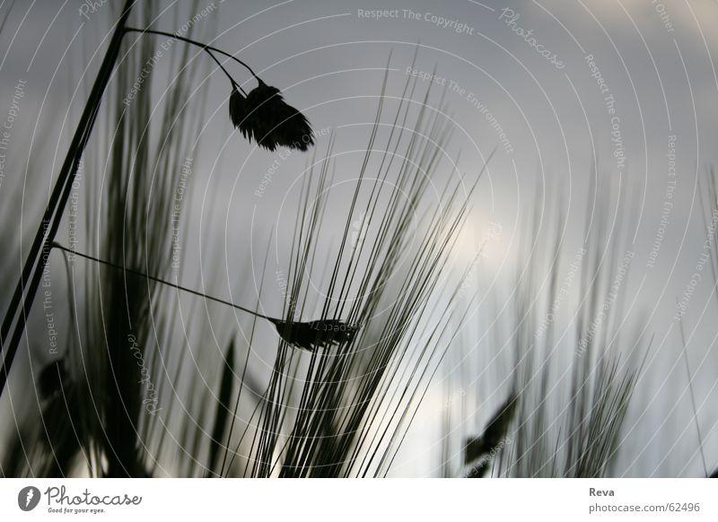 fehl am platz... Himmel Wolken dunkel Wiese Gras grau Feld Trauer kaputt Getreide
