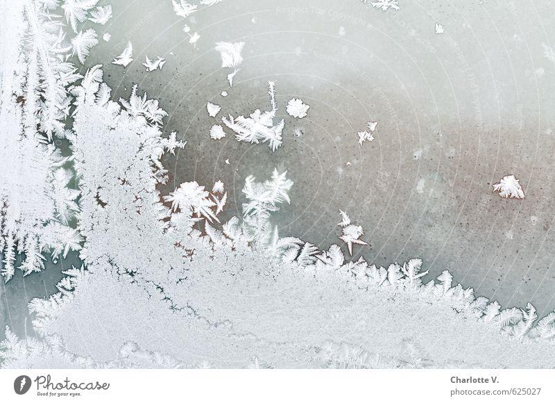 Eisflocken Natur schön weiß Wasser ruhig Winter kalt Fenster grau hell Schneefall elegant leuchten frisch ästhetisch