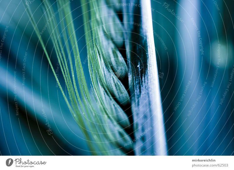 KORN dunkel Arbeit & Erwerbstätigkeit Gras Feld Elektrizität geheimnisvoll Getreide Halm Korn