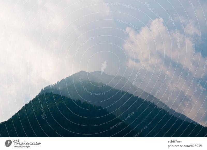 Aus eins mach drei Umwelt Natur Landschaft Pflanze Sonnenlicht Klima Klimawandel Wetter Schönes Wetter schlechtes Wetter Nebel Baum Grünpflanze Wald Hügel Alpen