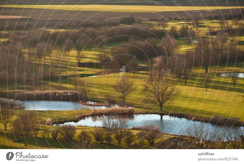 Golfer Umwelt Natur Landschaft Pflanze Winter Schönes Wetter Baum Gras Sträucher Park Wiese Wald Teich See ästhetisch Golfplatz einlochen Feld Schilfrohr