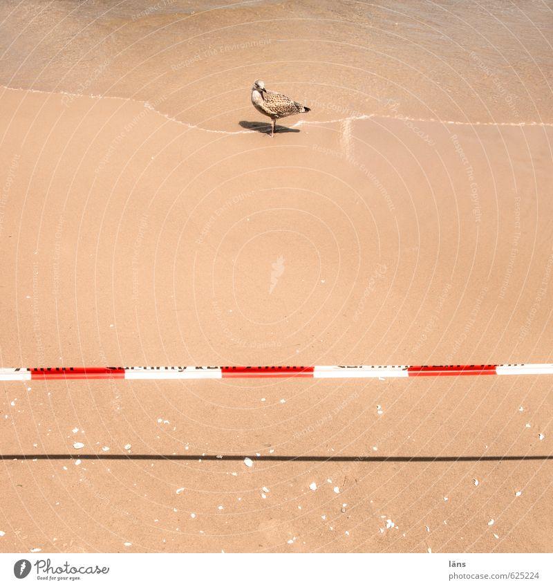nicht kreuzen l DO NOT CROSS Ferien & Urlaub & Reisen Sommer Sommerurlaub Sonne Strand Meer Wellen Umwelt Natur Urelemente Sand Wasser Schönes Wetter Küste