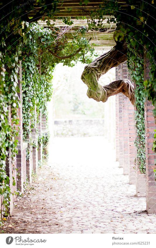 verwachsen Wellness harmonisch Wohlgefühl Zufriedenheit Erholung ruhig Natur Pflanze Baum Moos Park Wege & Pfade Blick ästhetisch braun grün Vertrauen
