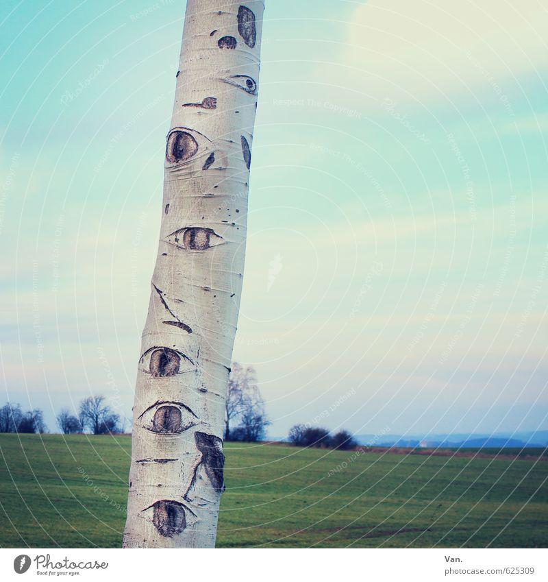 Mother Nature is watching you! Auge Pflanze Himmel Wolken Schönes Wetter Baum Gras Baumstamm Birke Wiese beobachten blau grün skurril Farbfoto Gedeckte Farben