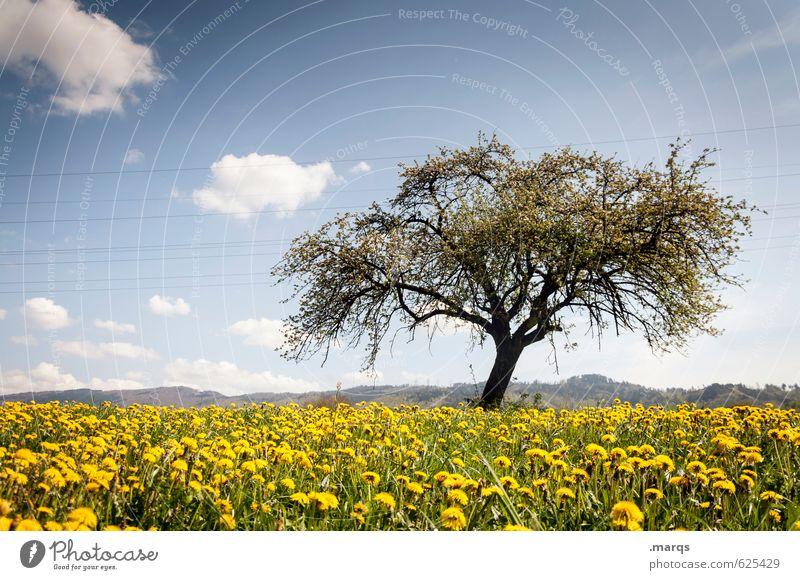 Sommerlich Himmel Natur schön Pflanze Baum Landschaft ruhig Wolken Umwelt Wärme Wiese Horizont Zufriedenheit authentisch Klima