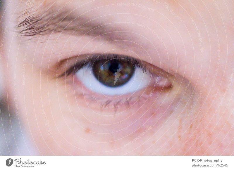 eingeblickt Frau Auge Haut rosa geheimnisvoll mystisch Sommersprossen Wimpern Augenbraue Hautfarbe Teint durchdringend