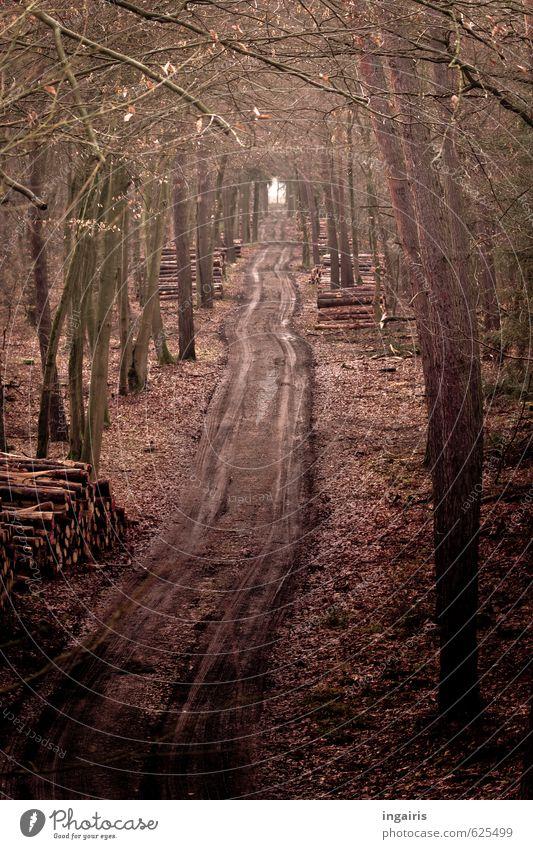 Auf dem Holzweg Landwirtschaft Forstwirtschaft Natur Winter Baum Blatt Wald Wege & Pfade Fußweg Holzstapel Reifenspuren Spuren dehydrieren dunkel nass natürlich