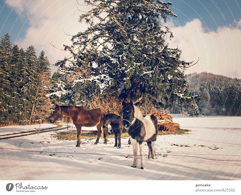 wild westallgäu Himmel Natur Baum Landschaft Wolken Tier Winter Wald Schnee Glück Familie & Verwandtschaft Freiheit Freundschaft Eis frei Idylle