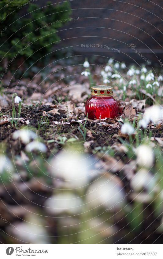 ewig. Trauerfeier Beerdigung Gartenarbeit Pflanze Blume Sträucher Dekoration & Verzierung Kerze Friedhof Windlicht Glas leuchten braun rot Traurigkeit Tod