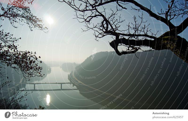 Donau Umwelt Natur Landschaft Pflanze Luft Wasser Himmel Wolkenloser Himmel Horizont Sonne Sonnenaufgang Sonnenuntergang Herbst Wetter Schönes Wetter Baum Wald