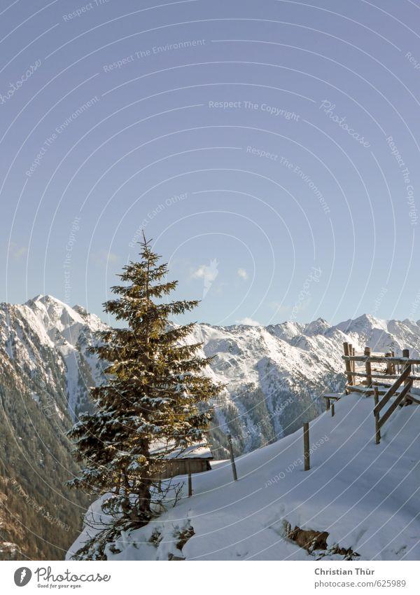 Winter auf der Reiteralm / Schladming Natur Ferien & Urlaub & Reisen Baum Erholung Landschaft Winter Berge u. Gebirge Umwelt Schnee Gesundheit einzeln Schönes Wetter Sehnsucht Alpen Schneebedeckte Gipfel Wolkenloser Himmel