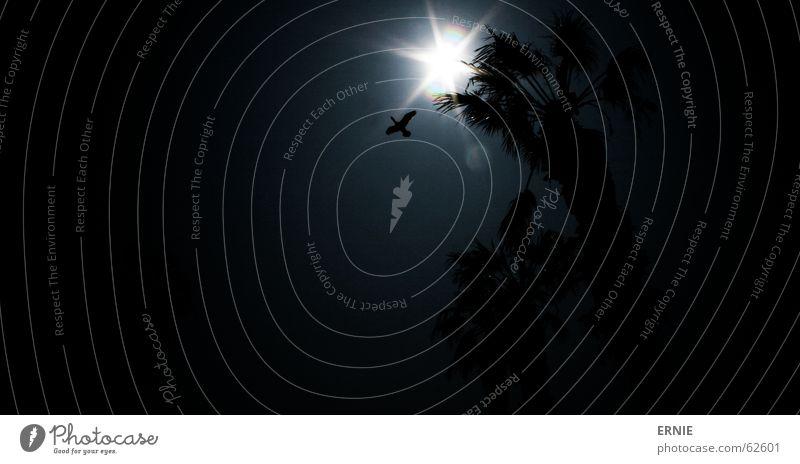 äääh... Vogel Palme dunkel Silhouette Chile Arica Ferien & Urlaub & Reisen Himmel Sonne