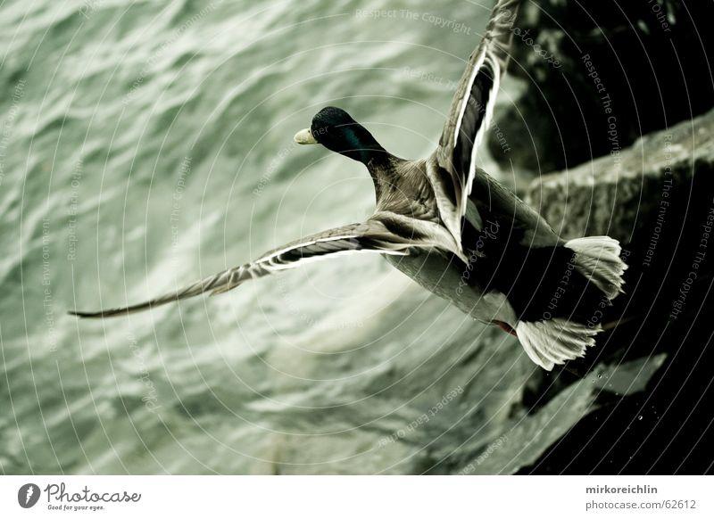 Flying High See Vogelperspektive Schwerelosigkeit dunkel Ente Luftverkehr fliegen Flügel Freiheit grenzenlosigkeit hoch Nervosität bigway oben
