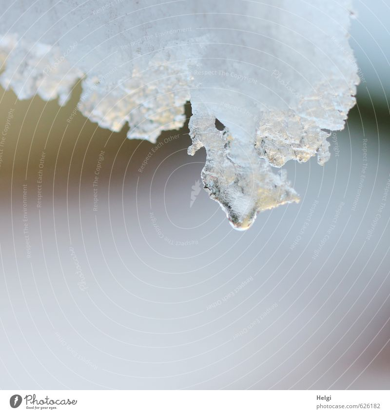 Tauwetter... Natur weiß ruhig Winter Schnee grau natürlich Stimmung Eis authentisch ästhetisch nass Wassertropfen Urelemente einfach Vergänglichkeit