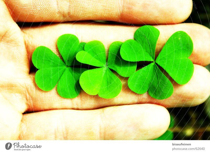 Dreiviertel Glück Hand Finger Pflanze Blatt festhalten Kleeblatt Sauerklee essbar Silvester u. Neujahr Neuanfang Farbfoto mehrfarbig Außenaufnahme Nahaufnahme