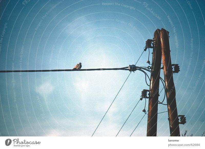 sitzplatz Elektrizität Vogel Isolatoren Leitung Strommast Energiewirtschaft Himmel