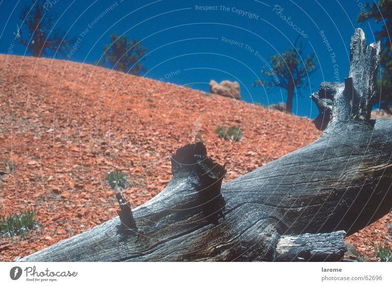 old story alt Baum Tod USA eigenwillig unfruchtbar Bryce Canyon