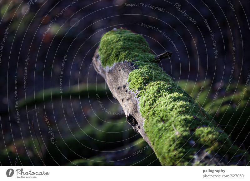 Moos Natur Landschaft Pflanze Frühling Sommer Schönes Wetter Baum Gras Wald Baumstamm Ast Zweige u. Äste Farbfoto Gedeckte Farben Außenaufnahme Nahaufnahme
