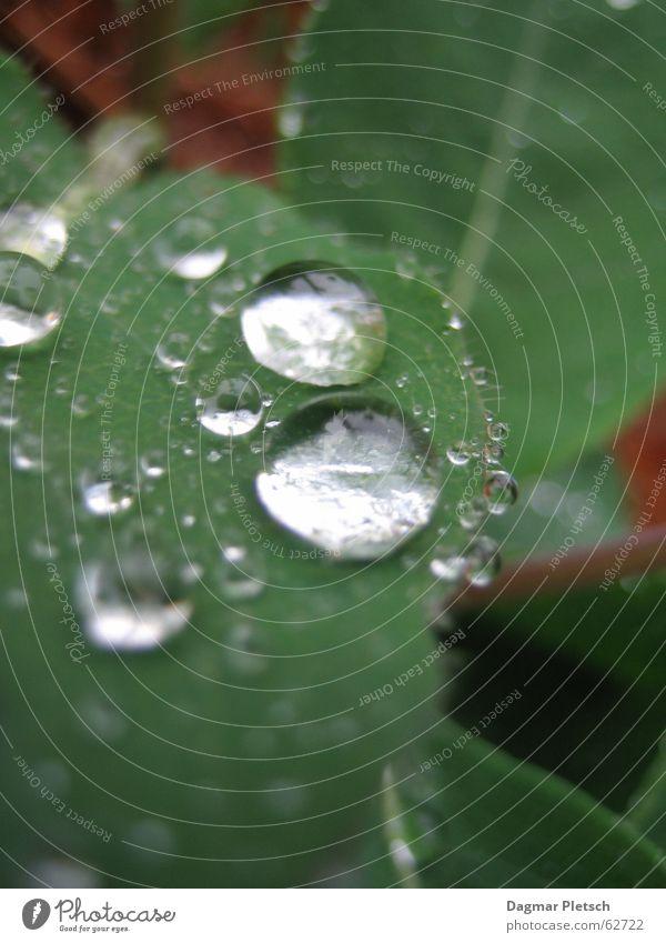 Regentropfen Wasser grün Blatt dunkel kalt nass Sträucher feucht