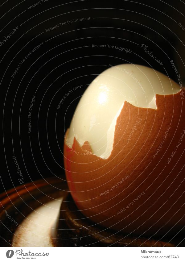 Hühnerprodukt Haushuhn Vogel Hühnerei Frühstück Schalen & Schüsseln Eierschale Eiklar Protein Eigelb Sonnenlicht Eierbecher Ernährung lecker Appetit & Hunger