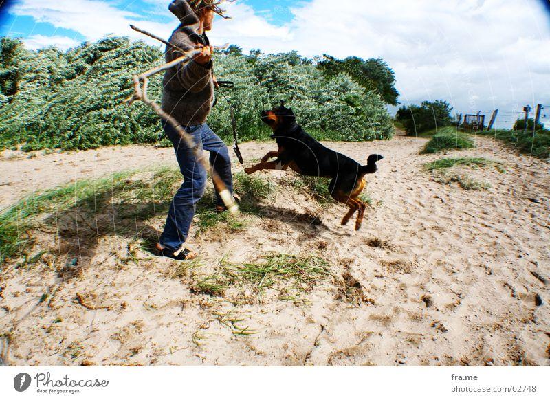 hol das stückchen Hund Strand Spielen Bewegung Junger Mann Dynamik werfen Haustier Stock Sandstrand Vignettierung spielend Mischling Haushund spielerisch