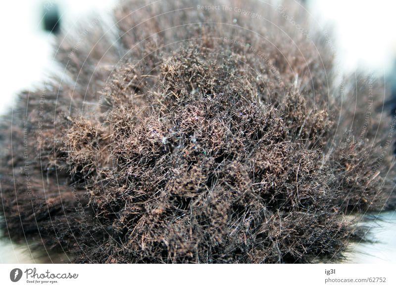holzexplosion Natur Erholung Blatt ruhig kalt Wärme Hintergrundbild Tod Holz Feste & Feiern braun Linie hell Zusammensein Zufriedenheit mehrere