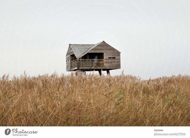 Haus im Schilf Natur Ferien & Urlaub & Reisen blau Pflanze Wasser Meer Landschaft Tier Ferne Winter Küste Holz grau braun Deutschland