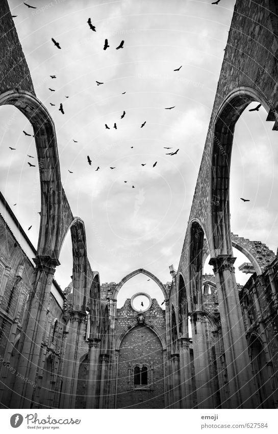 Haus Gottes Himmel Tier dunkel Gebäude grau außergewöhnlich Vogel bedrohlich Kirche Bauwerk Sehenswürdigkeit Ruine Schwarm Kinofilm