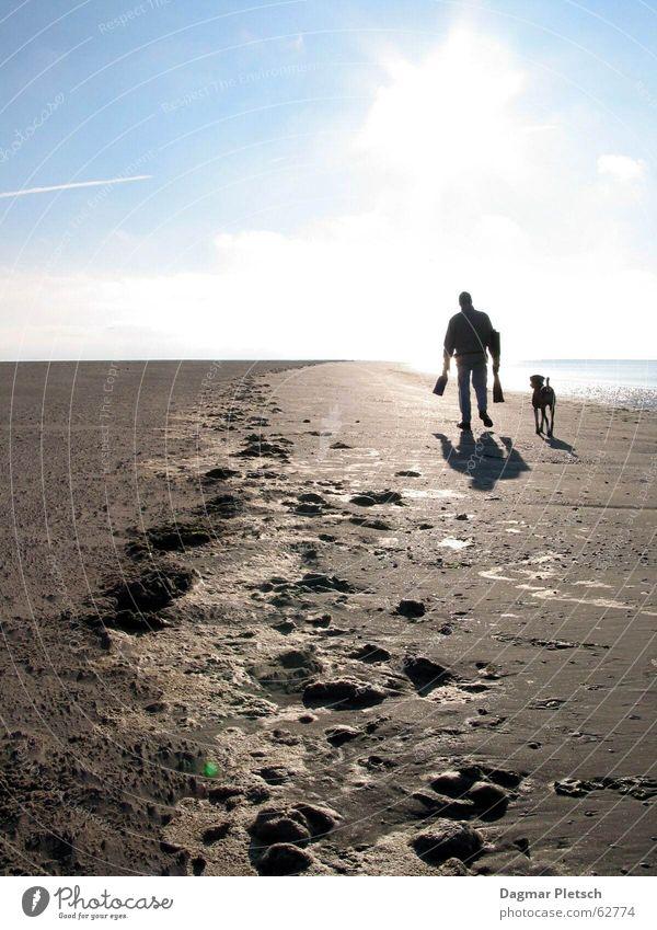Strandlauf Freiheit Sonne Meer Sand Wasser Küste Nordsee Hund laufen Zusammensein blau braun gold Wattenmeer Außenaufnahme Licht Schatten Reflexion & Spiegelung