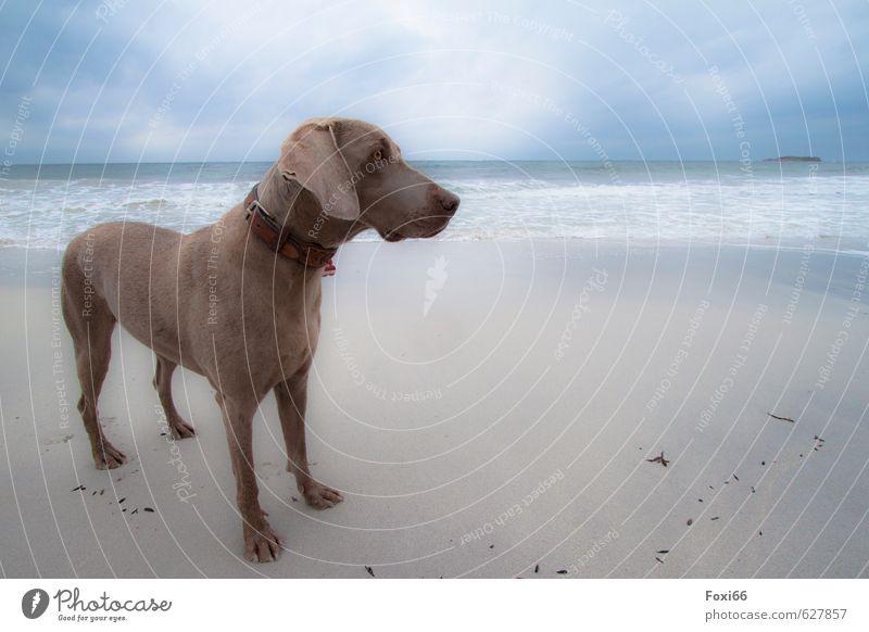 Tia am Strand Hund Himmel blau Wasser Erholung rot Wolken Freude Tier Ferne gelb Herbst grau Sand braun