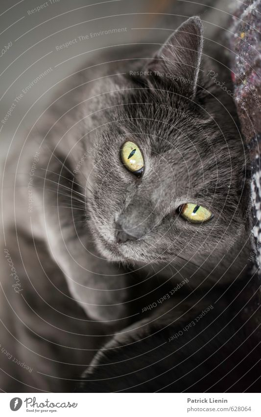 Pet Me Katze schön Tier lustig Gesundheit natürlich außergewöhnlich Stimmung ästhetisch Fröhlichkeit niedlich Freundlichkeit einzigartig Tiergesicht Haustier