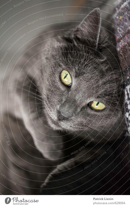 Pet Me Katze schön Tier lustig Gesundheit natürlich außergewöhnlich Stimmung ästhetisch Fröhlichkeit niedlich Freundlichkeit einzigartig Tiergesicht Haustier frech