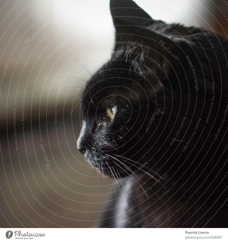Katzengedanken schön ruhig Tier Wärme Stil außergewöhnlich Lifestyle wild elegant Zufriedenheit authentisch ästhetisch einfach Freundlichkeit einzigartig
