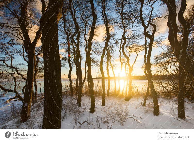 Secret Forest Umwelt Natur Landschaft Urelemente Luft Wasser Himmel Wolken Sonne Sonnenaufgang Sonnenuntergang Sonnenlicht Winter Wetter Schönes Wetter Eis