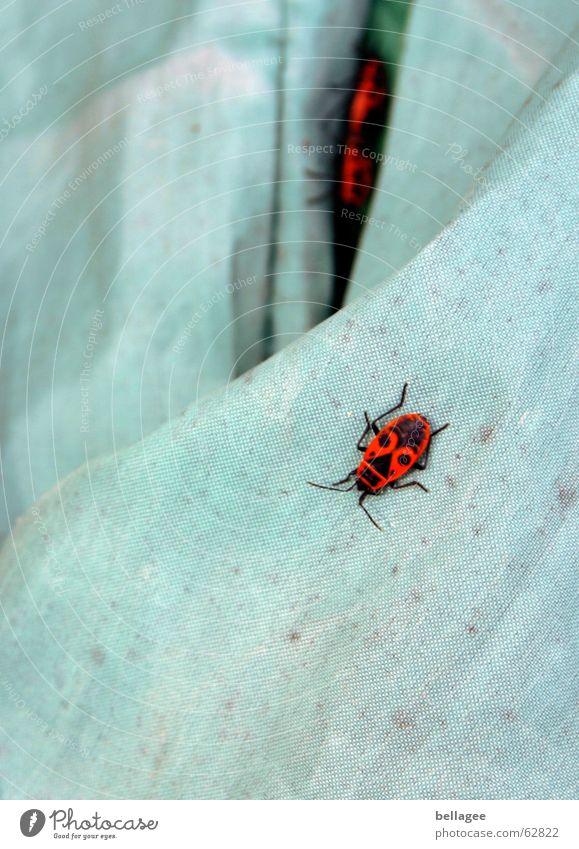 was machen die denn da? blau rot Tier tierisch Decke Flucht Käfer Gift Fortpflanzung Wanze Bäh