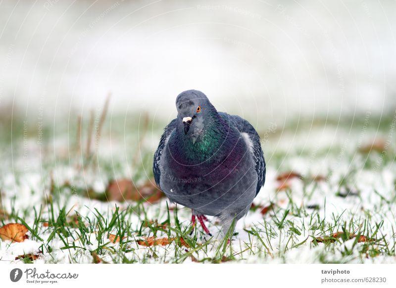 Natur weiß Farbe Tier Winter Schnee grau Freiheit natürlich Garten Vogel Park Körper wild Feder Frost