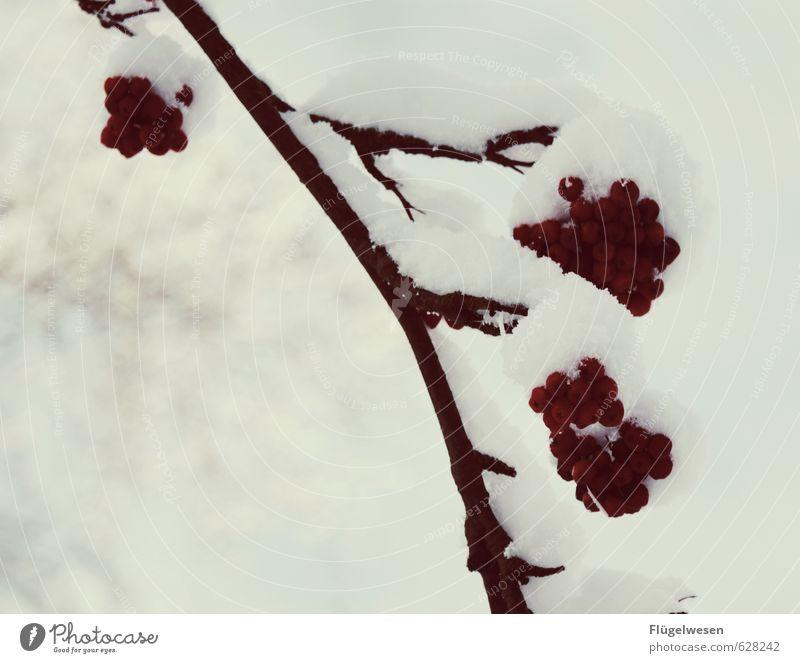 Über Lebens Wille Natur Ferien & Urlaub & Reisen Pflanze Baum Landschaft Tier Winter Umwelt Schnee Schneefall Eis Wetter Sträucher Klima Ast Frost