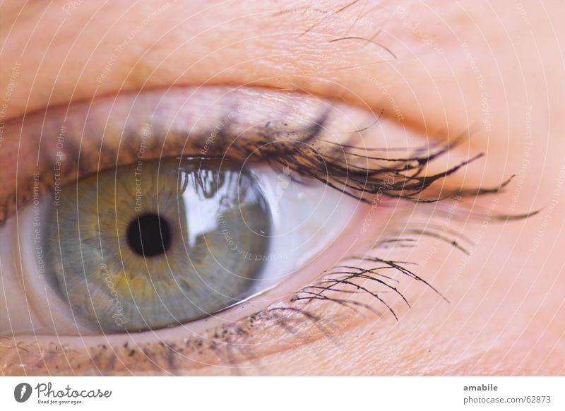 SEHNsucht Wimpern Kontaktlinse Reflexion & Spiegelung Hautfarbe Auge Blick Regenbogenhaut Mensch Farbe blau Makroaufnahme Pupille Blick in die Kamera