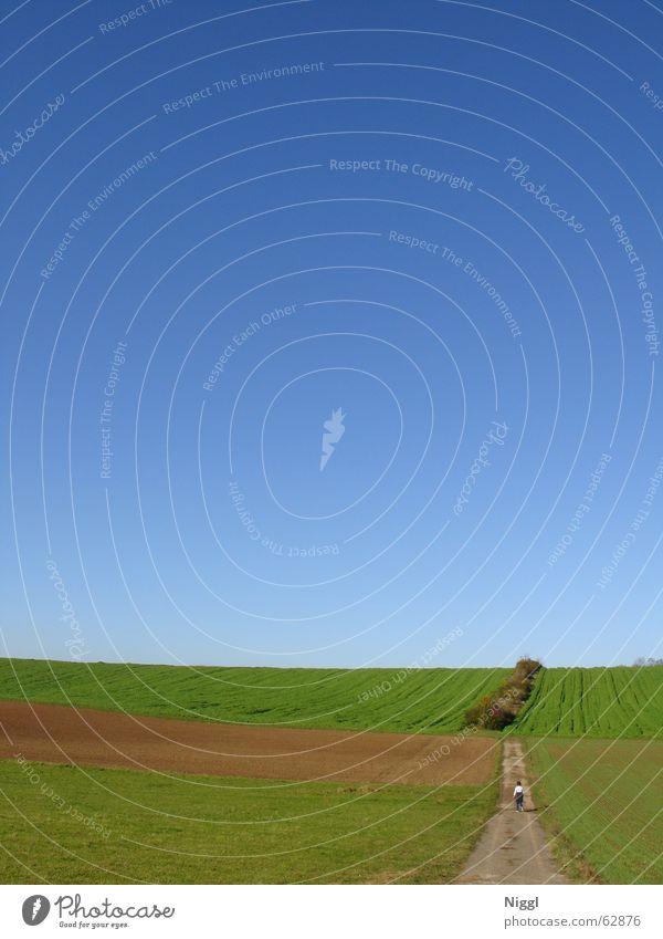 Walkin´ On Sunshine Himmel grün blau Herbst Freiheit Feld wandern gehen Spaziergang Fußweg Fluchtpunkt