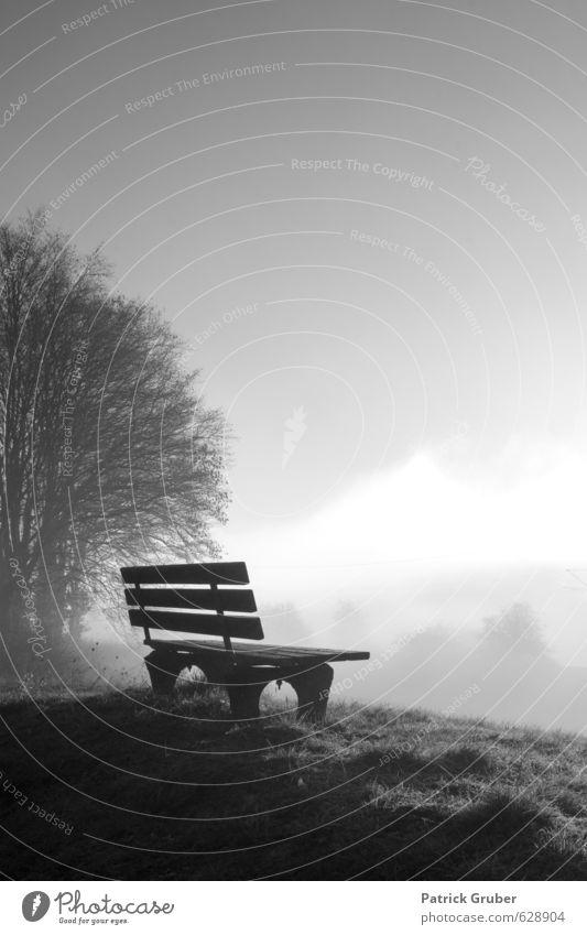 Einsame Sitzbank im Morgennebel Natur Einsamkeit Landschaft Wiese Kunst träumen Nebel Zufriedenheit Kultur Bank Dorf stagnierend Ruhepunkt