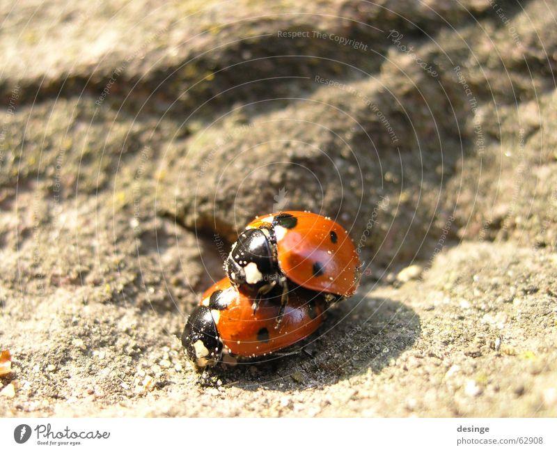 Doppeldecker Natur rot Sommer Freude Tier oben Gefühle Frühling Sand Glück klein Stein 2 Zusammensein Felsen Tierpaar