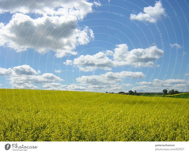 RAPSODY IN YELLOW Rapsfeld Wolken Goldener Schnitt Feld Länder Wiese gelb hell-blau Wäldchen Mai Baden-Württemberg schön Gelassenheit prächtig saftig blau-gelb